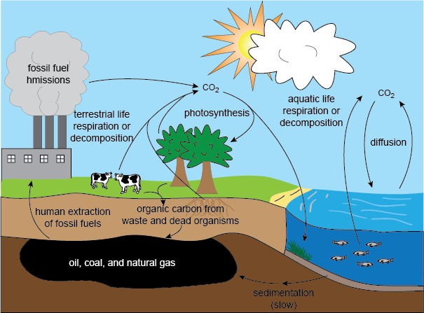 The Carbon Cycle ( Shmoop )